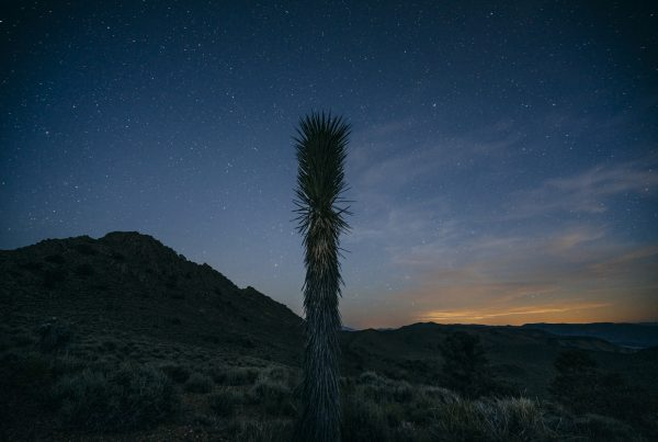 Joshua tree with stars and glowing sky in background at conglomerate mesa